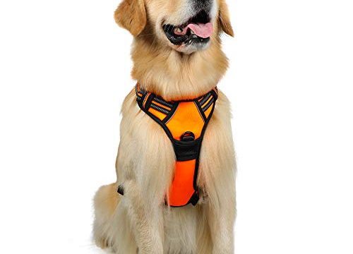 Rabbitgoo  Dog Harness No-Pull Pet Harness Adjustable Outdoor Pet Vest 3M Reflective Oxford Material Vest for Dogs Easy Control for Small Medium Large Dogs Orange, L